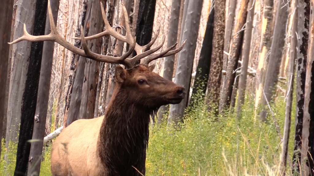 high elevation elk hunting